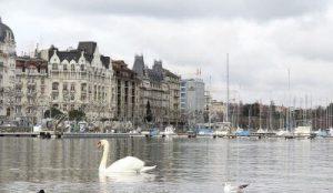 Genève avec lac Léman, appartements et bateaux amarrés. Swan nage sur le lac.